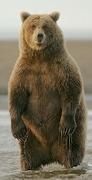 bias-cognitivi-roccia-orso