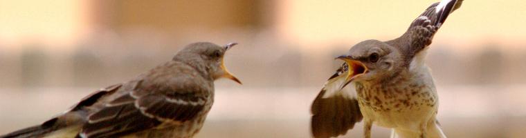 Leadership: vinci con le azioni e non con le discussioni