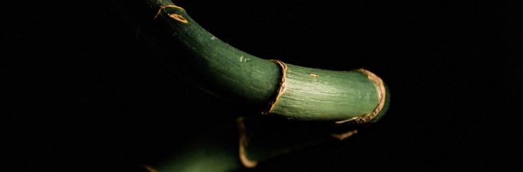 paura del futuro bamboo