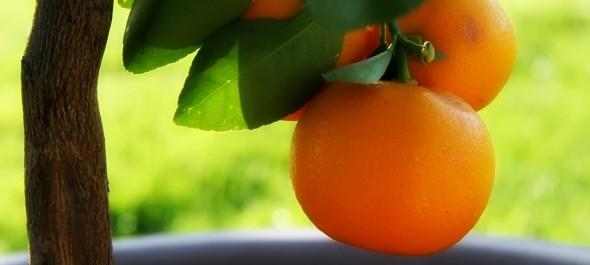 Cogli il frutto